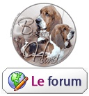 Бассет-форум