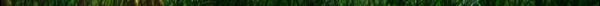 L'arbre du CaMéLéoN Index du Forum
